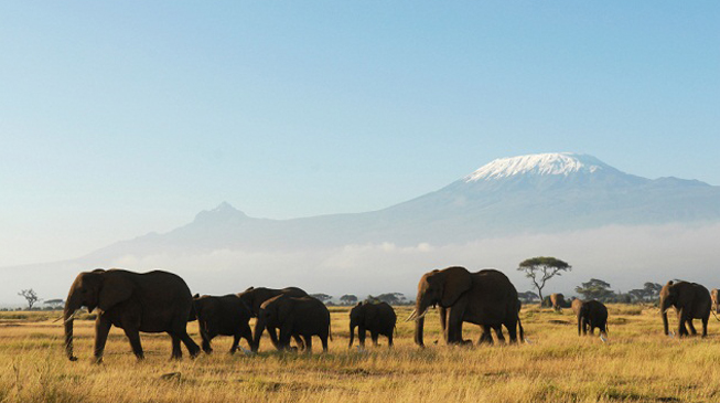 Freewallker-Kilimanjaro-expedition-1