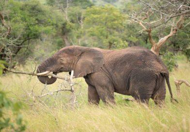Visit the Amazing Akagera in Rwanda