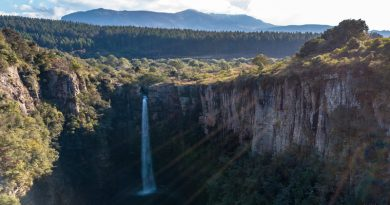 Things to Do on South Africa's Forest Attractions