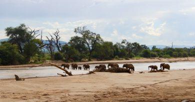 Ultimate Guide to a Kenya Safari