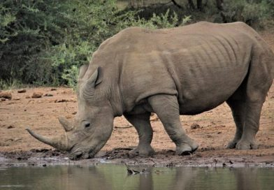 things to do in the kruger park area