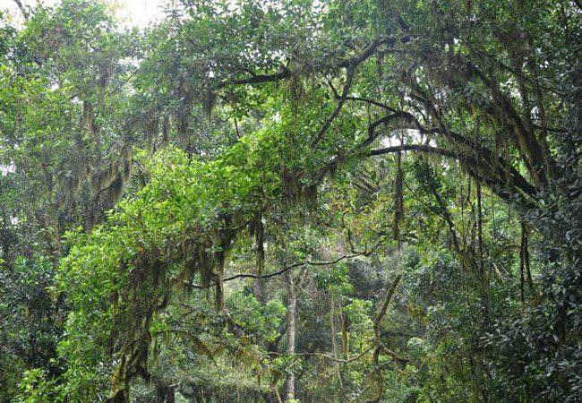 Thathe Vondo Forest